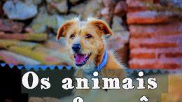 animais em francês